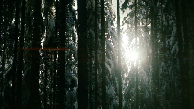 Sun moving in snowy forest