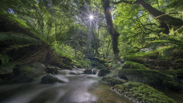 sun moving in time lapse across sky in forest - falling water stock videos & royalty-free footage