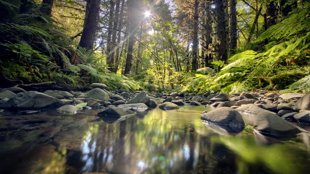 sun moving in time lapse in forest with creek - stream body of water stock videos & royalty-free footage