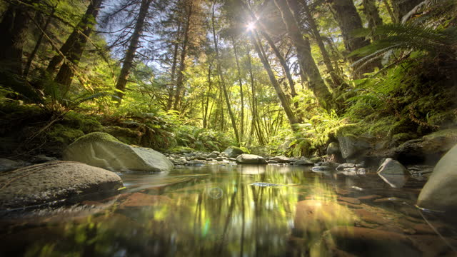 sun moving in time lapse in forest with creek - spring flowing water stock videos & royalty-free footage