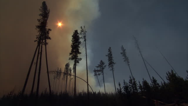 sun obscurred by smoke from burning forest fire, yellowstone, usa - smoke physical structure stock videos & royalty-free footage