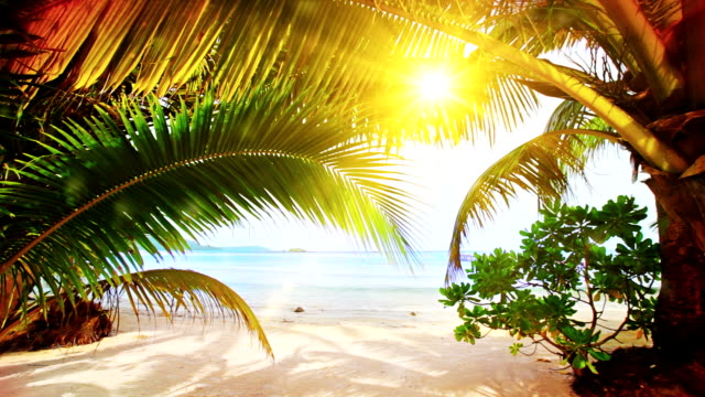 sun on the beach - tropical tree stock videos & royalty-free footage