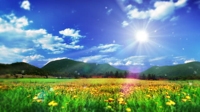 Sun over meadow