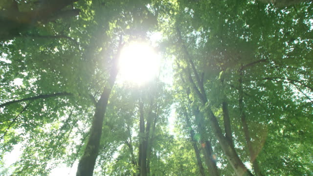 slo mo sole si copia tra le avenue - copertura di alberi video stock e b–roll