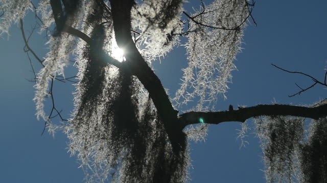 sun peeking through tree branches - wiese stock videos & royalty-free footage