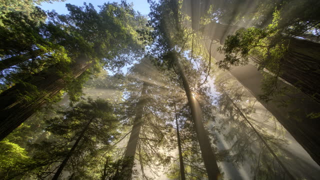 sun rays and fog in forest - tree stock videos & royalty-free footage