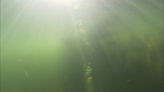 vídeos de stock, filmes e b-roll de sun rays pierce through murky water. available in hd. - grosso
