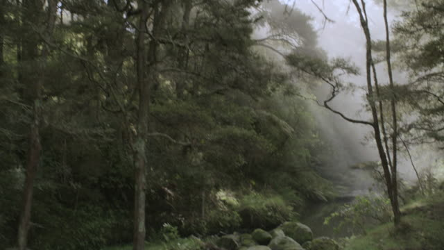 montage sun rays shining on babbling brook in forest and  beech tree trunks rising in thick forest / new zealand - beech tree stock videos and b-roll footage