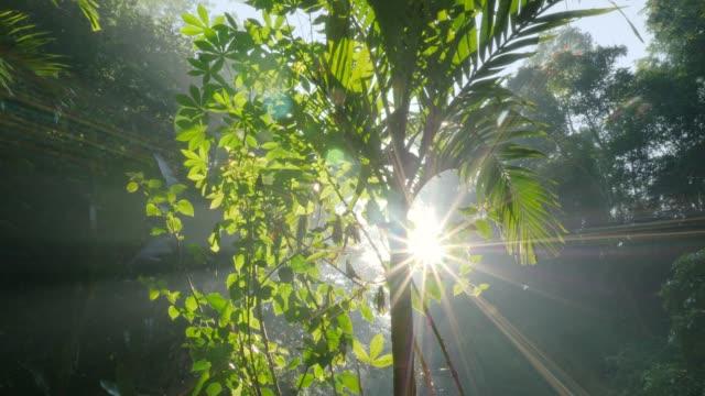 ジャングルの葉を通して太陽光線 - 水の形態点の映像素材/bロール