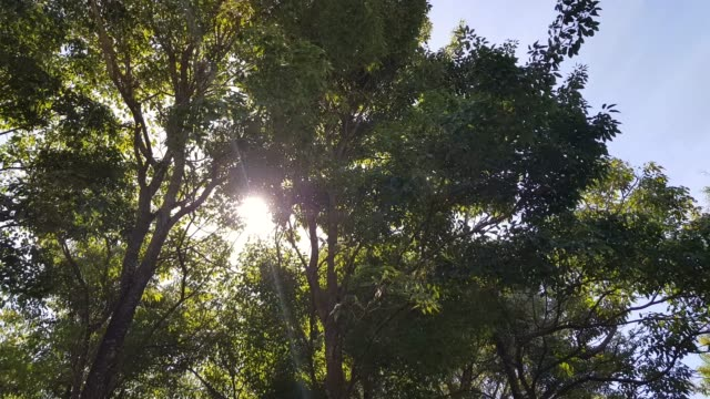 sun rays through trees - azul stock videos & royalty-free footage