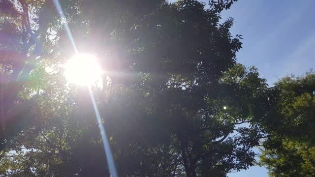sonnenstrahlen durch bäume - azul stock-videos und b-roll-filmmaterial