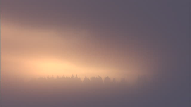 Sun rises behind freezing fog, Yellowstone, USA