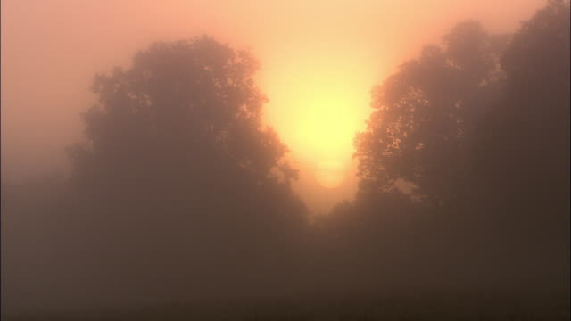 Sun rises behind mist and oak trees at dawn, Richmond Park, London, UK