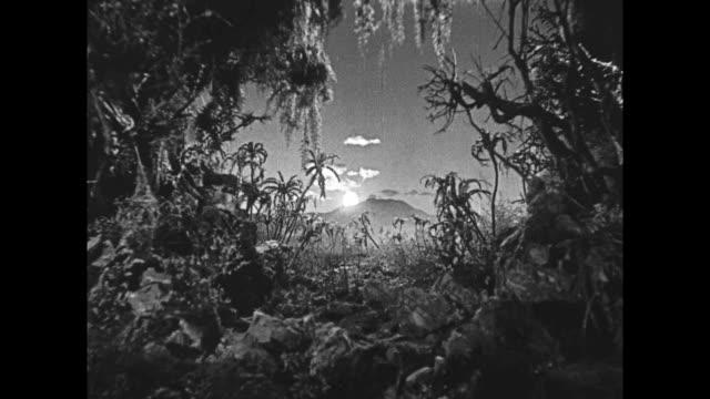 1925 sun rises on jungle scene - 1925年点の映像素材/bロール
