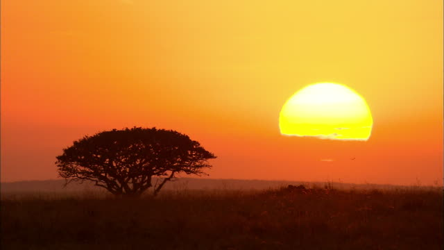Sun rising at Serengeti