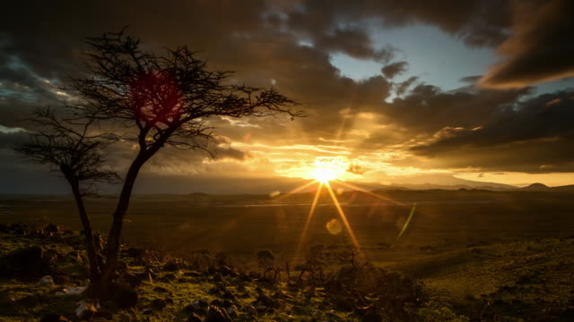 tl sun rising behind silhouetted tree, tanzania - landscape scenery stock videos & royalty-free footage