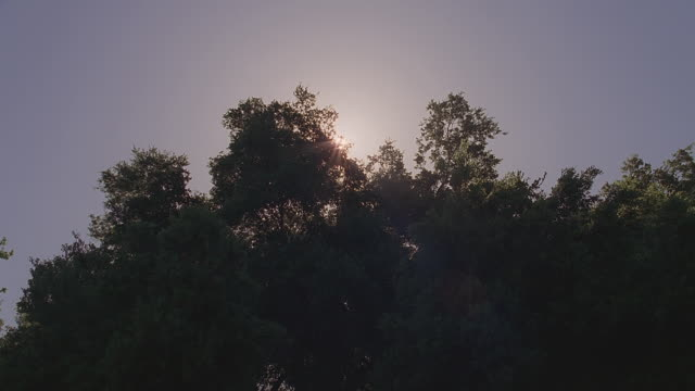 ms sun rising from behind silhouetted tree branches / santa barbara, california - clear sky stock videos & royalty-free footage
