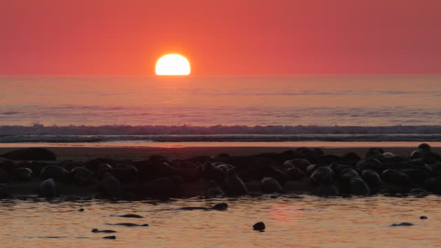 Sun rising in red sky over silver ocean, many seals on sandbar in foreground