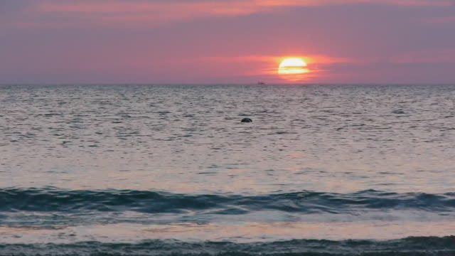 sun rising over ocean, lone seal in foreground, fishing boat on horizon, gentle atlantic ocean, cape cod national seashore, massachusetts - horizon over water stock videos & royalty-free footage
