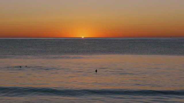 vídeos y material grabado en eventos de stock de ws sun rising over ocean, orange sky, blue atlantic ocean, seals swimming in foreground, cape cod national seashore, massachusetts - cuatro animales