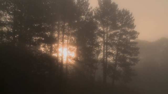 WS PAN Sun rising through mist over Costello Creek at Algonquin Park / Whitney, Ontario, Canada