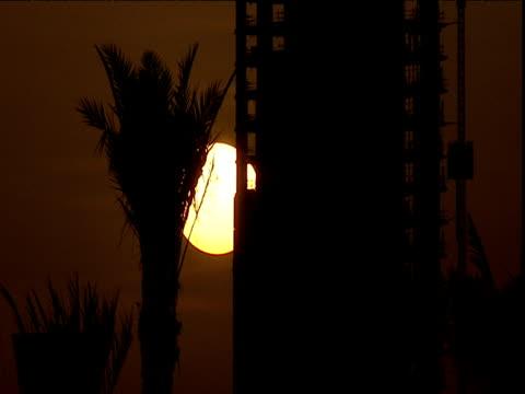 sun sets behind silhouetted skyscraper and palm tree dubai - erezione video stock e b–roll