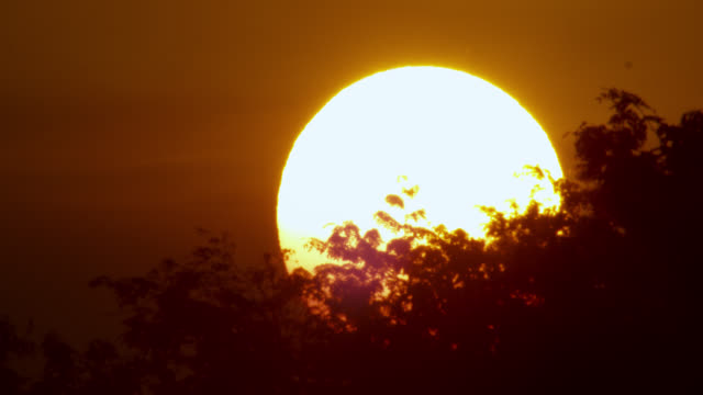 sun sets behind trees. - sunset stock videos & royalty-free footage
