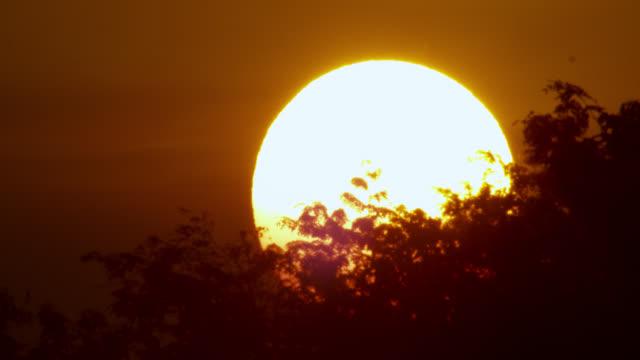 vídeos y material grabado en eventos de stock de sun sets behind trees. - televisión de ultra alta definición