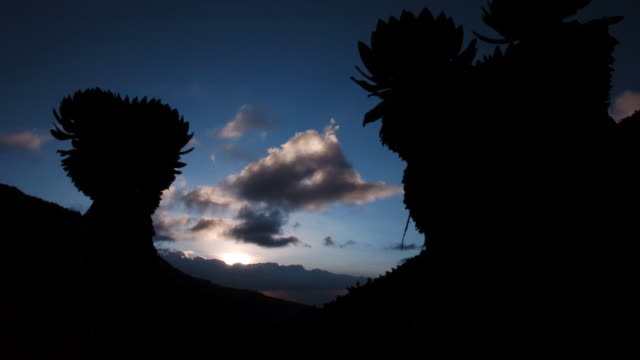 Sun sets over Mount Kenya and giant groundsels, Kenya