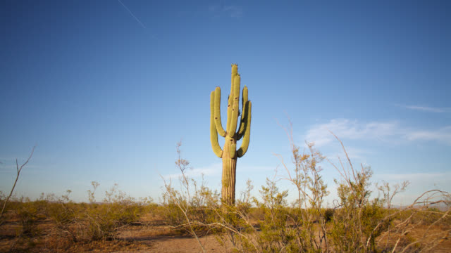 tl sun sets over saguaro cactus, arizona, usa - cactus video stock e b–roll