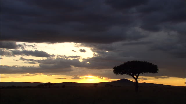 sun setting at serengeti - tanzania stock videos & royalty-free footage