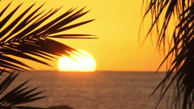 CU, SELECTIVE FOCUS, sun setting behind sea, palm leaves in foreground, Playa de las Americas, Tenerife, Canary Islands, Spain