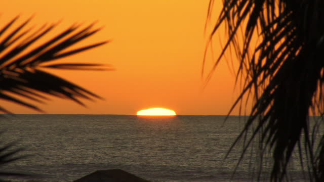 ms, selective focus, sun setting behind sea, palm leaves in foreground, playa de las americas, tenerife, canary islands, spain - fan palm tree stock videos & royalty-free footage