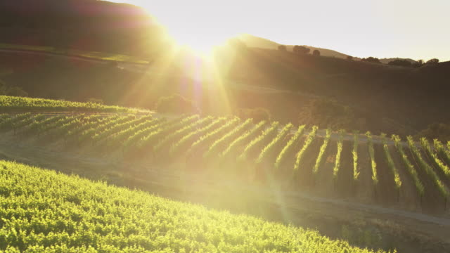 vídeos de stock e filmes b-roll de sun setting behind vineyard covered hills in northern california - drone shot - vinha