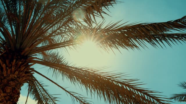 Sun setting on a beach with a palm tree