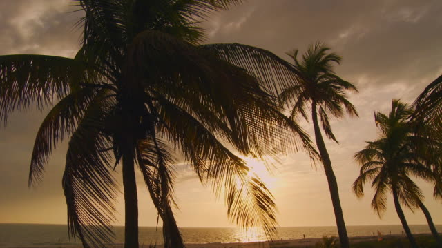 ms, td, sun setting  on beach with palm trees / sanibel, florida, usa - fan palm tree stock videos & royalty-free footage