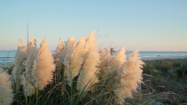sun setting on the north carolina coast - bald head island stock videos and b-roll footage