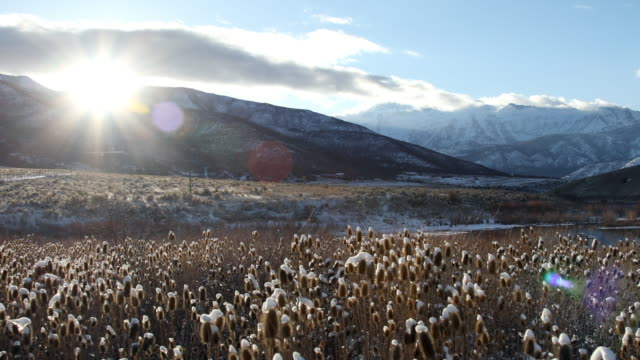 sun setting over mountain shining on field of thistle - thistle stock videos & royalty-free footage