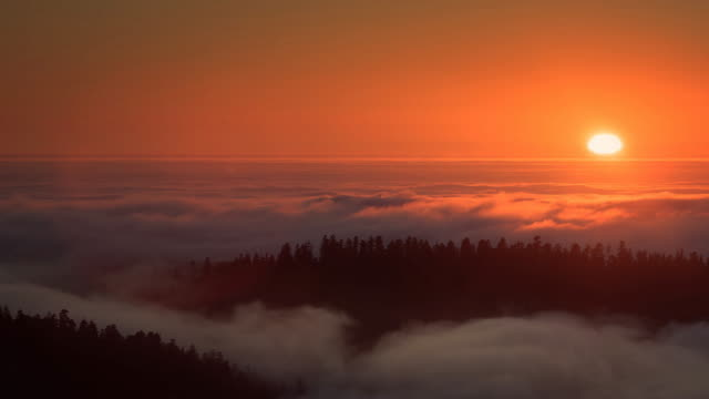 sun setting over sea of fog, redwood national park, california - treetop stock videos & royalty-free footage