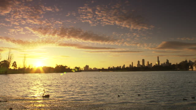 Sun setting pastel light Melbourne skyline over lake in the foreground a black swan swims by with her babies behind her
