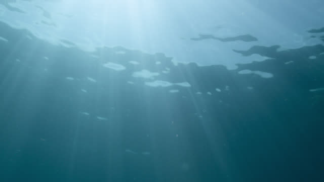 sun shimmers through surface of blue sea, bahamas - underwater stock videos & royalty-free footage