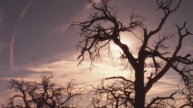 Sun shines on dead tree in Arches National Park, tilt up