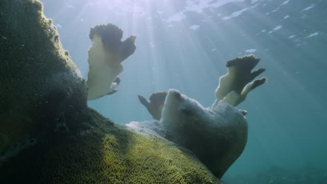 vídeos y material grabado en eventos de stock de sun shines onto bleaching coral on reef, bahamas - bimini