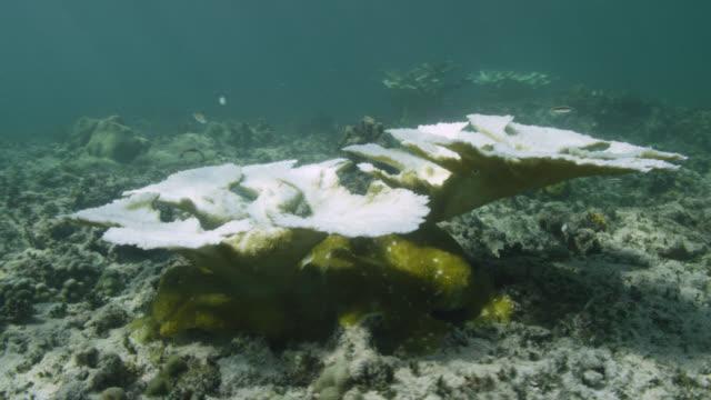 stockvideo's en b-roll-footage met sun shines onto bleaching coral on reef, bahamas - bimini