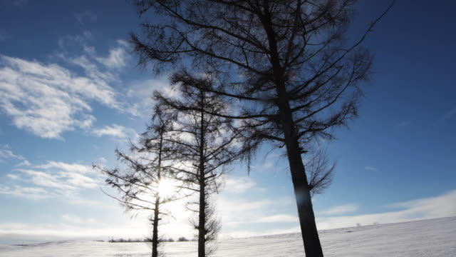 sun shines over trees in japan winter landscape, low angle - kamikawa subprefecture stock videos and b-roll footage
