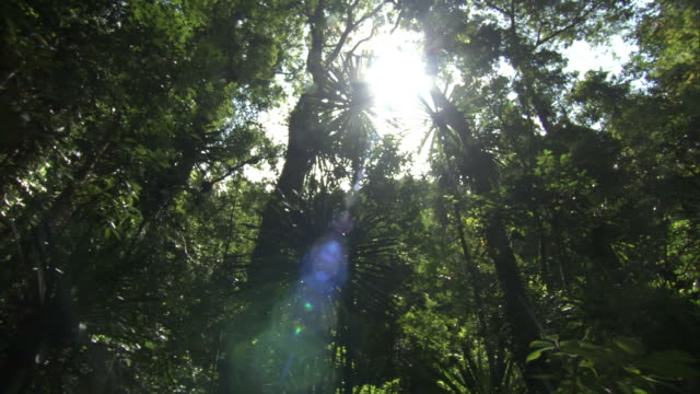 Sun shines through foliage in dense rainforest, Madagascar