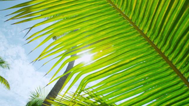 sun shines through palm fronds - palme stock-videos und b-roll-filmmaterial