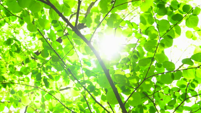 sun shines through the branches of green leaves - tranquil scene stock videos & royalty-free footage