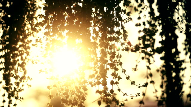 sun shines through the tree leaves. - saturated colour stock videos & royalty-free footage