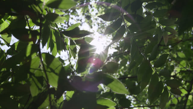 sun shines through trees in forest, costa rica - shiny stock videos and b-roll footage